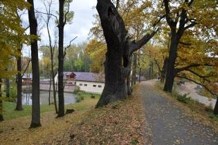 5 Hráz Podleského rybníka s chráněnými duby a rekonstruovaným mlýnem